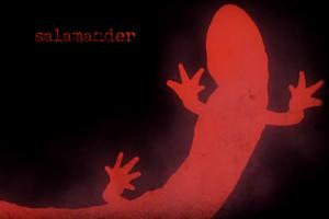 Salamander-300