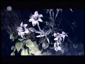 SAKURA-KeepOnBreathin-2p