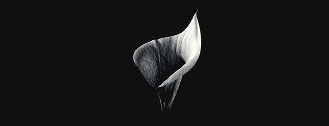 35Diwrnod-Fleur-650