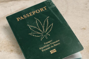 Cannabis-temp-300