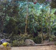 thegreatindoors-forestset-300