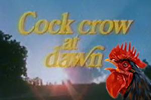 Cock crow at dawn